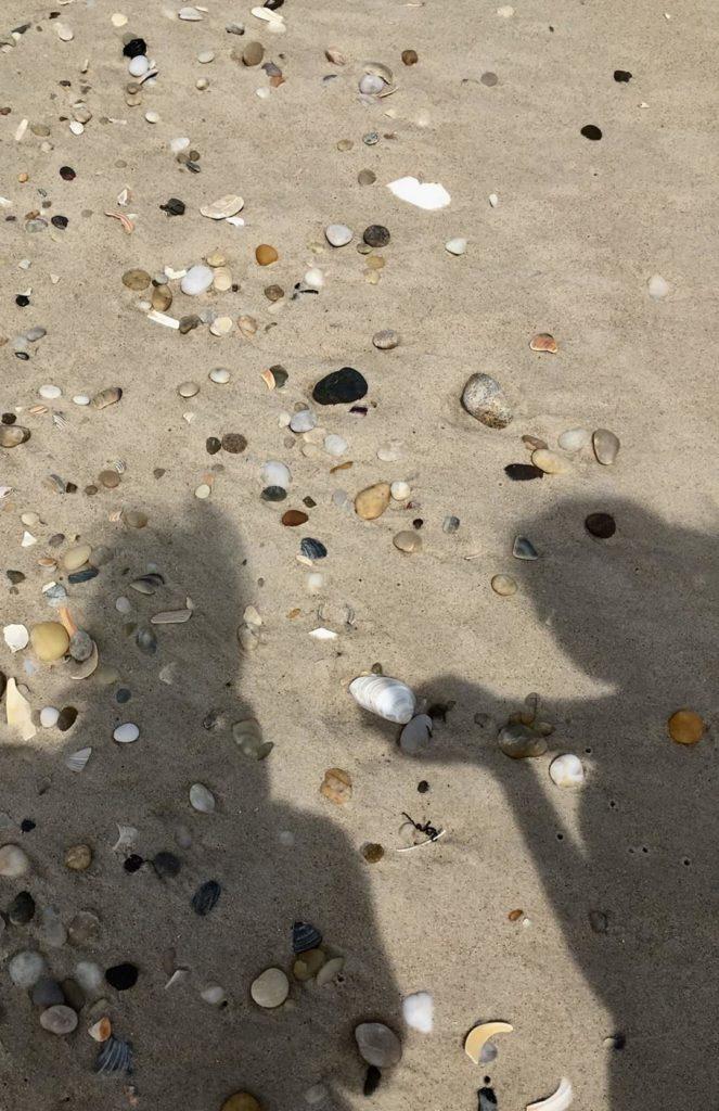 shadows holding shells