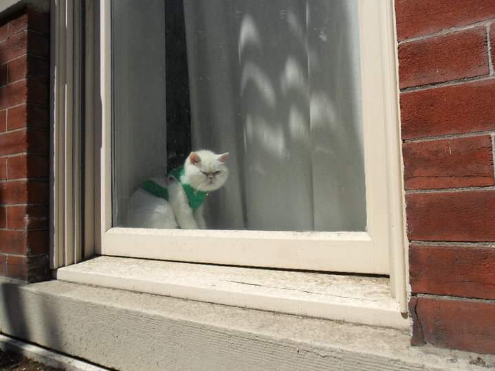 grumpy cat in window, 2015